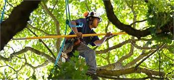 Tree Topping, Trimming, Removal, and Firewood Delivery (Aspen to Vail)