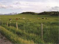 Horse Ranch Part-time Weekend Position